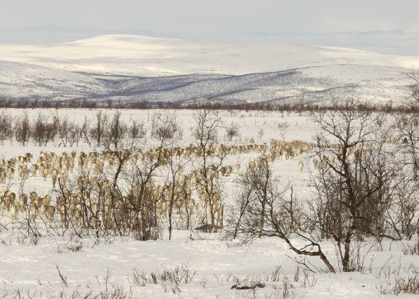 Wind, reindeer, time. Naamakkavuoma, 2010. Photo: Leena Valkeapää