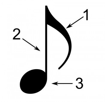 In the tune. Parts of a musical note. Picture: Wikimedia